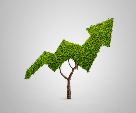 Plant growing in the shape of an arrow isolated on gray background Stockfoto