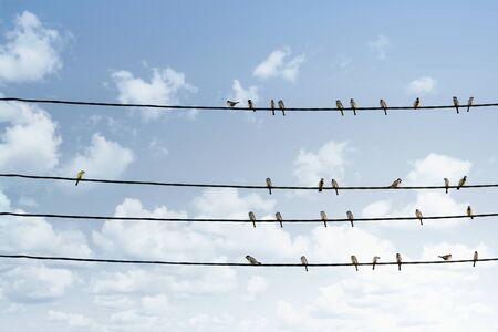 Concepto de individualidad, un pájaro que se destaca entre la multitud de otros pájaros en la línea eléctrica.