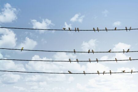 Individuality concept, one bird standing out from the crowd of other birds on the power line Stock fotó
