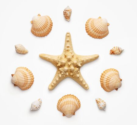 High angle view of seashells and starfish isolated on light grat background