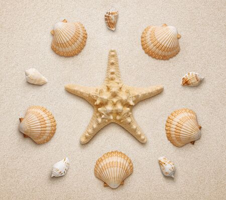 High angle view of seashells and starfish isolated on sand background