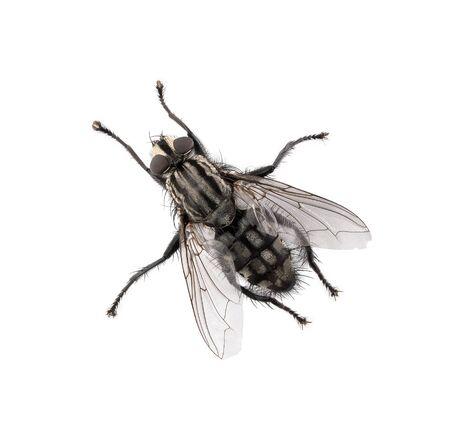 Wysoki kąt widzenia muchy na białym tle