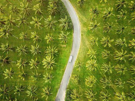 Aerial view of a coconut plantation, Cairns, Australia Stock fotó