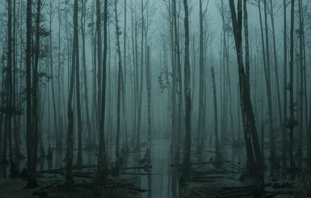 Empty, misty swamp in the moody forest with copy space Stock Photo