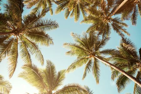 Low angle view of tropical palm trees over clear blue sky background with copy space 版權商用圖片