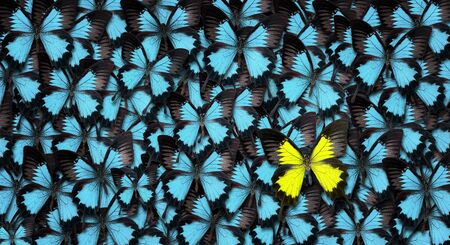 Standing out from the crowd concept. High angle view of a yellow butterfly over many blue ones with copy space