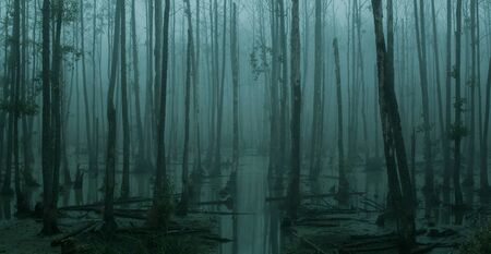 Panoramic view of empty, misty swamp in the moody forest with copy space