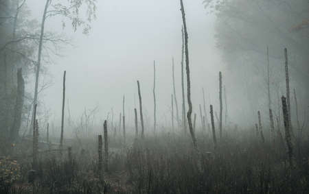 Empty, moody autumn swamp on a foggy morning with copy space 版權商用圖片