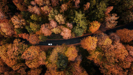 High angle view of a road trough the autumn forest with copy space 版權商用圖片