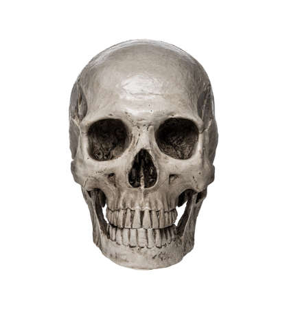 Close up of human skull isolated on white background