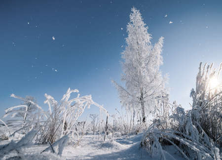 Tree covered with hoarfrost in the winter scenery