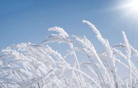 Frozen grass on a sunny winter morning 版權商用圖片