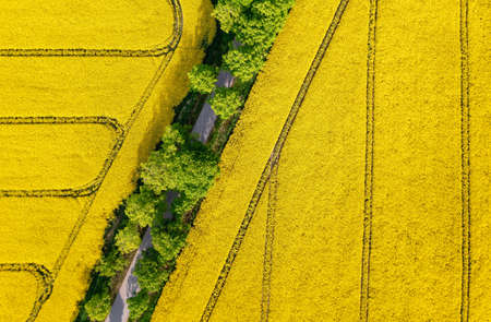 Aerial view of a road throught the rapeseed field, nature background with copy space