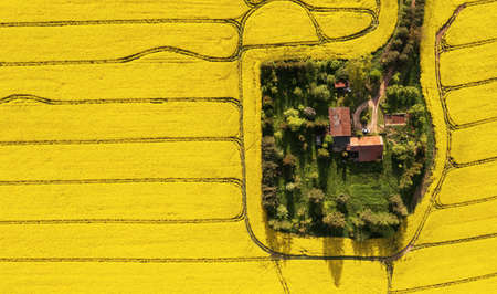 Aerial view of a farm in the middle of the rapeseed field with copy space Archivio Fotografico