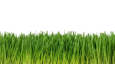 Easy to extend, seamless, fresh grass isolated on white background Archivio Fotografico
