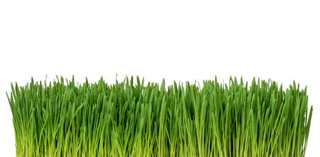 Close up of fresh grass isolated on white background