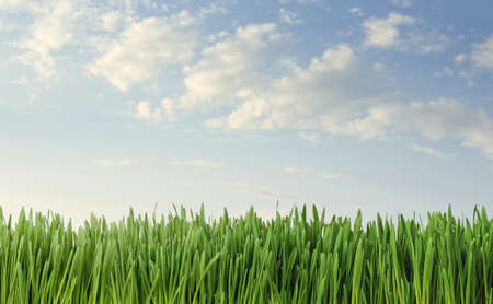 Close up of fresh grass over blue sky background with copy space Archivio Fotografico