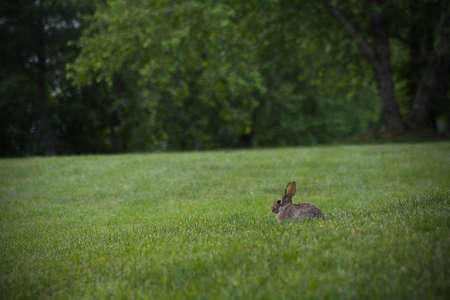 rabbit in field photo