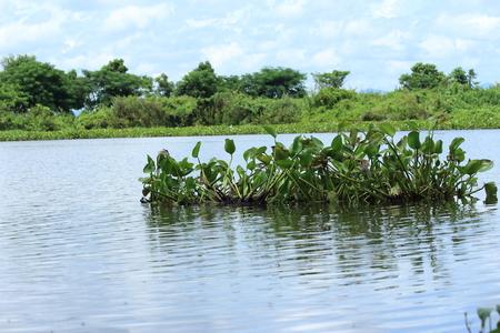 white nile: Jacinto de agua