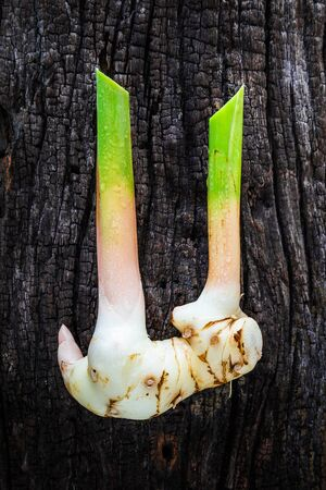 galangal: rhizome of galangal on old wooden.