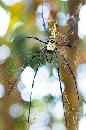 prey: Spider waiting for prey on spider webs.