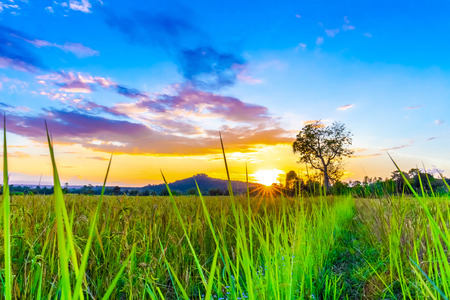 Rice fields and mountains in the sunset Stockfoto