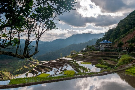rice-terraces near Poitan-village with reflections of the clouds in the ricefields photo