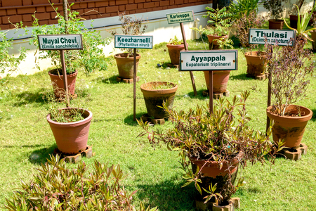 the name of the drug: Ayurvedic herb garden with various herbs with name tags in clay pots