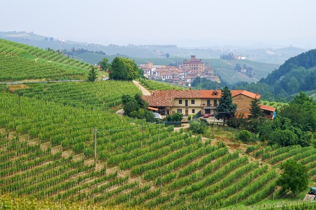 Vineyards in Piemont overlooking the town of Barolo, Italy photo