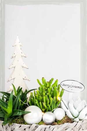 suggested: Christmas plant arrangement isolated against white background with a suggested framework Stock Photo