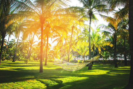 Hammock in tropical coconut palm grove with sunspot and sunbeams Stock fotó - 97556525