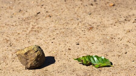 Rock and a green leaf in sand, white background and texture.