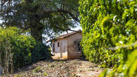 Farm house, coffee plantation tree and simple farm life Stockfoto