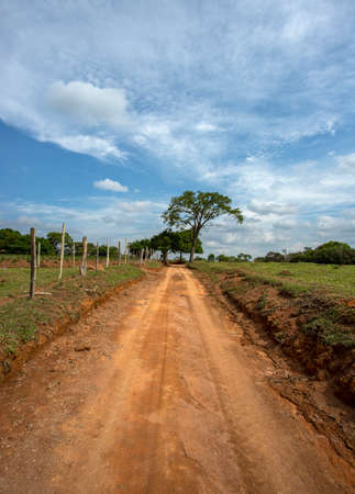 Dirt road and tree in the background. Imagens - 163432843