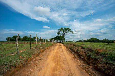 Dirt road and tree in the background. Imagens