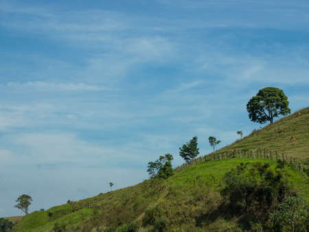 Sloping hill. Trees on a hill.