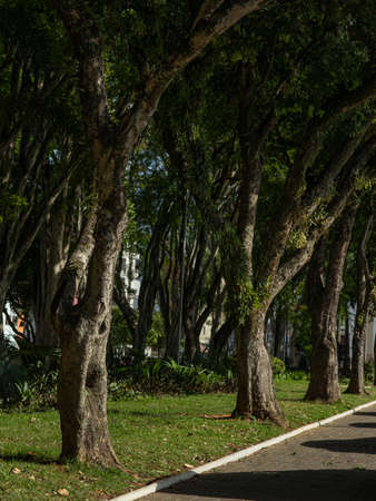 Sidewalk under the trees. A place for relaxation and activities.