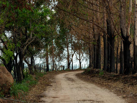 Dirt road, trees burned by fire. Damaged nature. Stockfoto