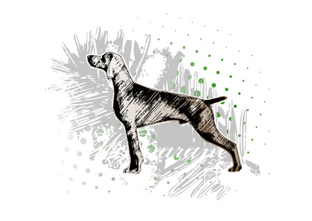 pointer dog: hunting dog 1