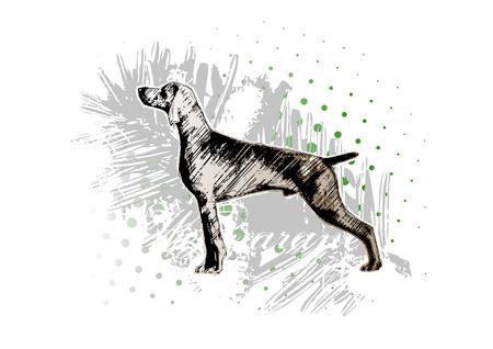 perro de caza 1