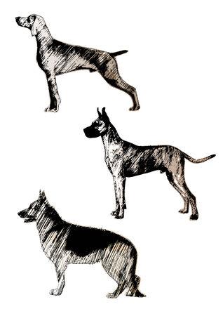 shepherds: dogs trio
