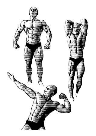 muscular build: bodybuilding trio Illustration