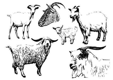 queso de cabra: ilustraciones de la cabra Vectores