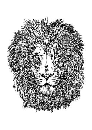 The Lion Head vector illustration