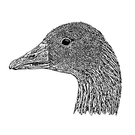 Goose Head Vector Illustration on white Background