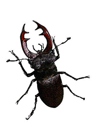 Stag beetle vector illustration isolated on white background