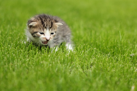 Domestic cat playing otdoors, in a garden Stock Photo