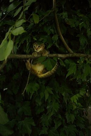 A cute cat swinging on a tree branch in the garden 免版税图像