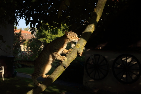 A cute cat playing on a tree branch in the garden