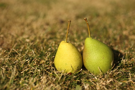 two pears lie on the grass Stok Fotoğraf